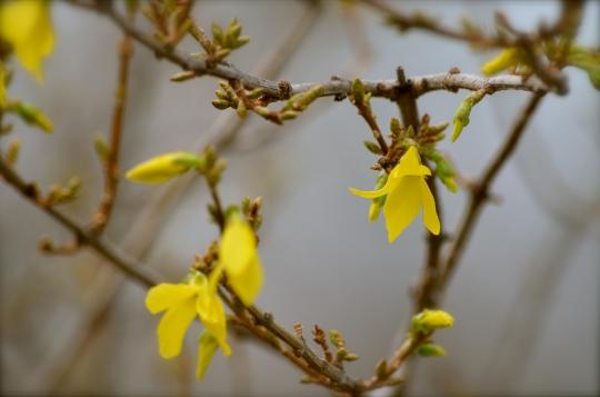 Pretty yellows...