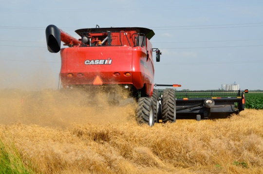 Cutting some wheat.