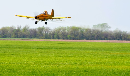 Green wheat just a few weeks ago being treated by a crop duster.
