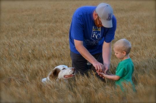 Checking wheat heads. circa 2011