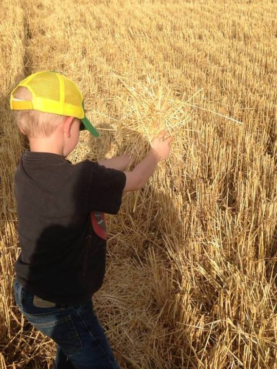 Rowan takes a look at some straw.