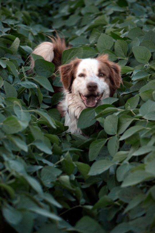 Tucker the Wonder Dog